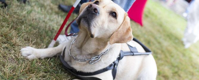 Elderly Care Meriden CT: Senior Pet Adoption